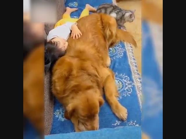 Bình yên bên thú cưng