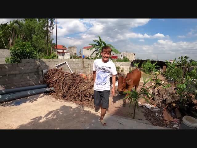 Con trai trêu bà Tân Vlog: Nhuộm trắng cả con bò