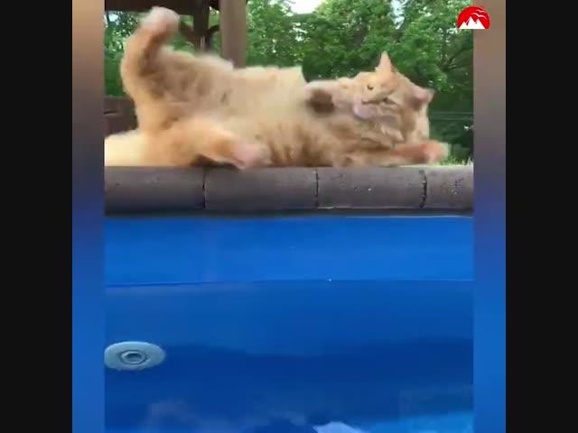 Thím mèo cực chảnh tấu hài