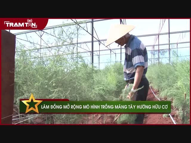 Lâm Đồng mở rộng mô hình trồng măng tây hướng hữu cơ