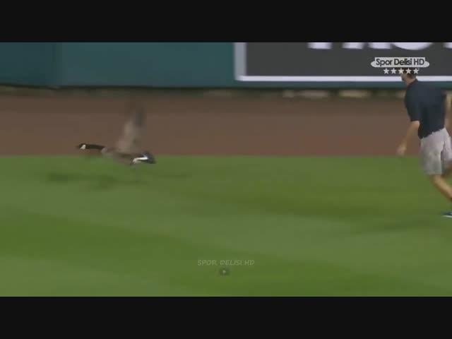 Hài thể thao - Khi động vật lên sân cỏ  - Phần 1