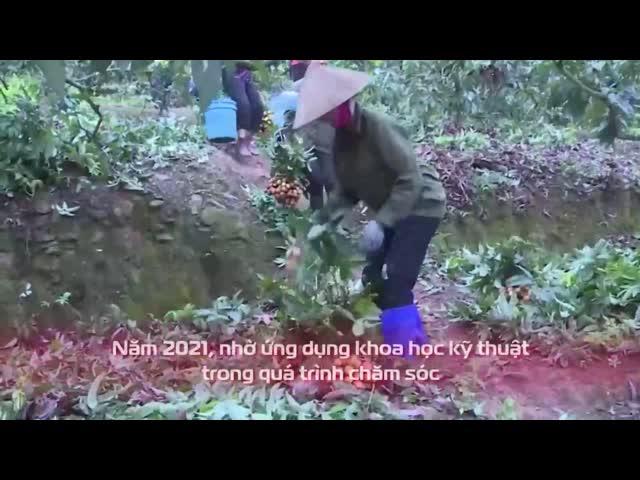 Chương trình: Hướng về Bắc Giang - Chung tay tiêu thụ mùa vải chín cùng MC QUYỀN LINH!