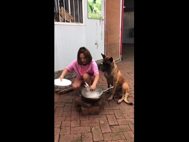 Chú chó thông minh và vui nhộn