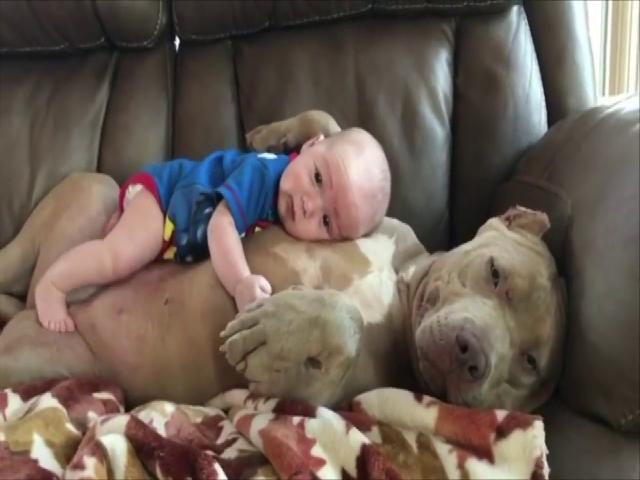 Ai cũng muốn nuôi một chú chó thế này  Xem là thích