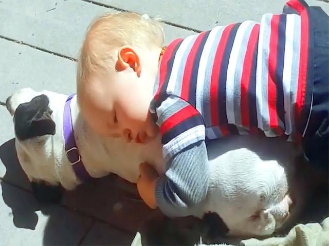 Trẻ em và chó là bạn tốt  Trẻ em và chó vui nhộn