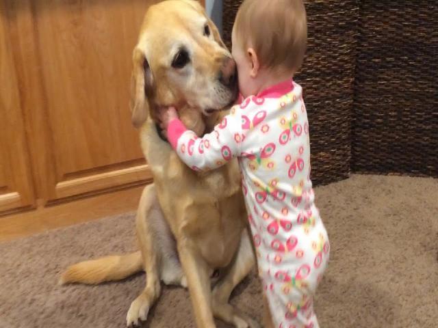 Coi cấm cười TV: Phản ứng của trẻ em khi chơi với chó  Trẻ em và thú cưng vui nhộn