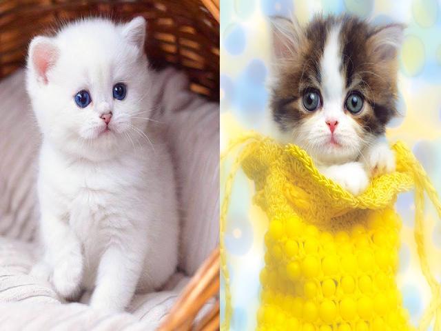 Mèo mới đẻ  Video mèo dễ thương và vui vẻ #29