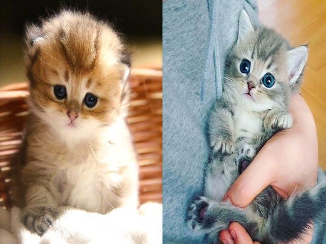 Mèo mới đẻ  Video mèo dễ thương và vui vẻ #31