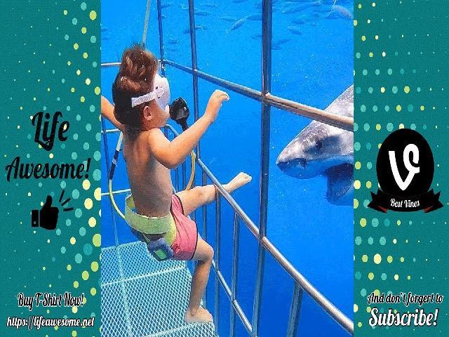 HahaTV | Phản ứng của động vật vui nhộn - Cố gắng không cười với cá mập với em bé - HĐS | Hài hước !