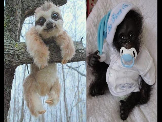 Coi cấm cười TV   Video động vật bé nhỏ dễ thương  Tổng hợp khoảnh khắc dễ thương của các loài động vật #6    Cười ngất ngây