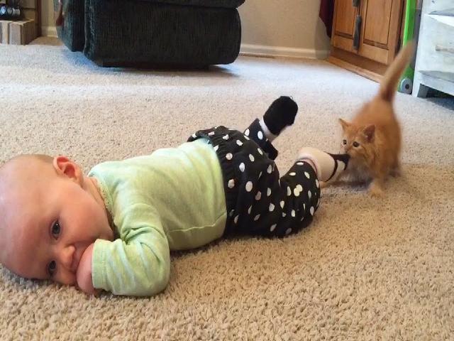 Trẻ em và mèo vui nhộn - Video trẻ em vui nhộn