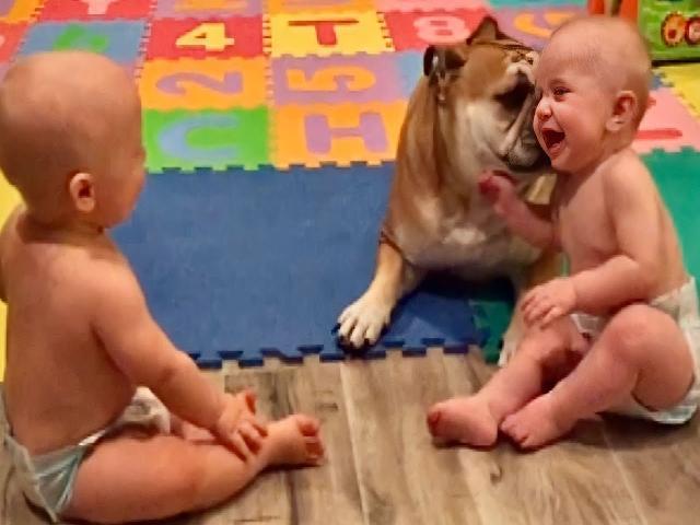 Trẻ em chơi với chú cún