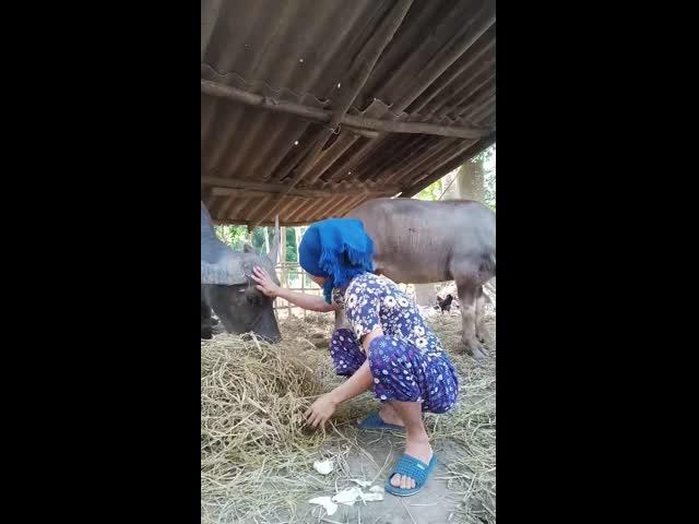 Đứa con gái đáng bát cơm ghê